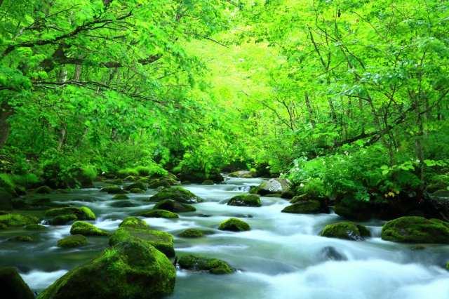 私が暮らしたことがある街の話~青森県と長野県、一瞬神奈川県~