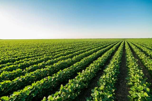 未経験者が農家や農業法人に就職できる?6つの疑問をQ&Aで解説